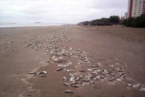 Revista Puerto - Tres mil toneladas de peces muertos en Buenos Aires y Uruguay