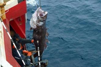 Revista Puerto - Captura máxima de merluza negra y justificaciones en el CFP