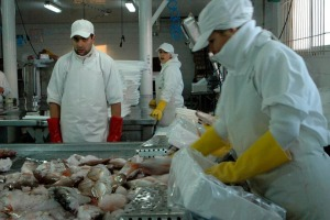 INDEX Trabajadores de Costa Brava cuando trabajaban.
