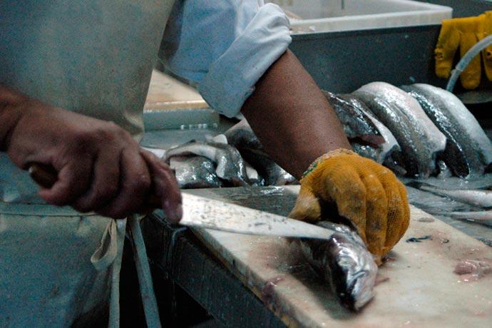 Revista Puerto - Cada vez menos merluza se procesa en tierra en Chubut